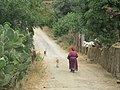 Walking the goats.jpg