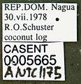 Wasmannia auropunctata casent0005665 label 1.jpg