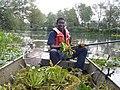 Water Chestnut Volunteer (7557354190).jpg