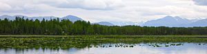 Cook Inlet taiga - pond with water lilies bordered by spruce forest, Kenai NWR