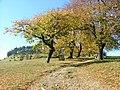 Weg auf den Ipf , Bopfingen - panoramio.jpg