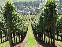 Weinberge bei Pleisweiler