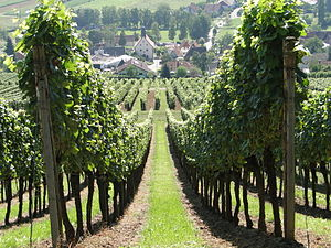 Palatinate (region) - Vineyards near the Deutsche Weinstraße (German Wine Route)