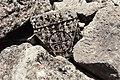West Church, Me'ez (ماعز), Syria - Corbel with cross inscribed in medallion - PHBZ024 2016 5496 - Dumbarton Oaks.jpg