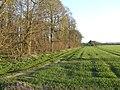Western edge of Broom Covert - geograph.org.uk - 397814.jpg