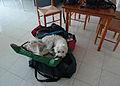 Westiepoo reisefertig 2012 091.JPG
