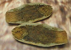 Actinistia - Whiteia fossils