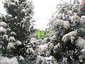 Wielkanoc 2013 pod sporym śniegiem.JPG