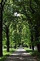 Wien-Penzing - Naturdenkmal 529 - Rosskastanienallee II.jpg