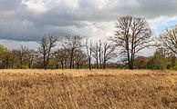 Wijnjeterper Schar, Natura 2000-gebied provincie Friesland 05.jpg