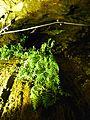 WikiProjekt Landstreicher Sturmannshöhle 18.jpg