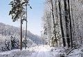Winter im Teutoburger Wald02.jpg