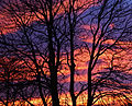 Winter sunset (3181572967).jpg
