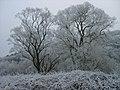 Winterimpressionen-rauhreif-2008-009.jpg