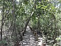 Wood Bridge at the Entrance of Sundarban.jpg