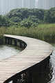 Wooden Walkway @ Hong Kong Wetland Park (2038511056).jpg