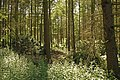 Woods on the Knowsley Estate - geograph.org.uk - 882084.jpg