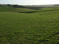 Wormhill Bottom - geograph.org.uk - 313990.jpg