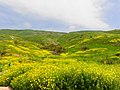 Yellow valley - panoramio.jpg