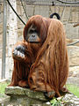Zoo027.jpg