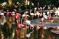 Zoo de Barcelona - panoramio.jpg