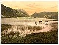 (Llyn Dinas (cattle study), Gwynant Valley, Wales) LOC 3752430640.jpg