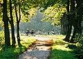 ©RGN Foto Ruhebank im Tiergarten von Schloss Raesfeld.jpg
