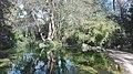 Εθνικός κήπος-Αθήνα.jpg