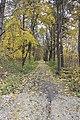 Байловский парк - 2.jpg
