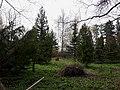 Ботанічний сад педагогічного університету в Сумах.jpg