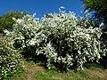 Ботанічний сад ім. М.Гришка IMG 9082.jpg