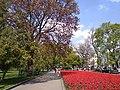 Вікове дерево в саду Шевченка Т.Г.jpg