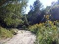 В парку - panoramio (1).jpg