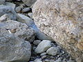 Кам'янка попеляста (Oenanthe isabellina).JPG