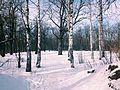 Копосовская дубрава зимой.JPG