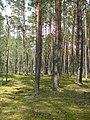 Ліс в Поліському природному заповіднику.jpg