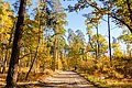 Осенняя дорога в заповедном лесу - panoramio.jpg