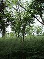 Парк шума Гази Баба во мај (161).JPG