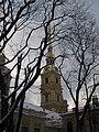 Петропавловский собор сквозь крону деревьев.JPG