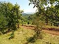 Планина Озрен (18).jpg