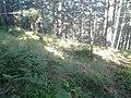 Планина Озрен (75).jpg