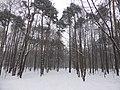 Покровское-Стрешнево, Москва.jpg
