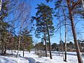 Придорожная лесопосадка - panoramio.jpg