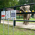 Слон3.jpg