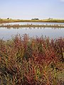 Солоні озера Кінбурнської коси (1).jpg