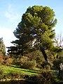 Уголок Форосского парка.jpg
