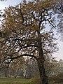 Украина, Киев - Главная обсерватория НАН 09.jpg