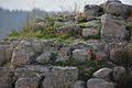 חומת תל בית שמש.jpg