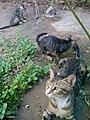قطة مع صغارها 2.jpg
