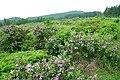 后山的风景 - panoramio - jiang-wen-jie (2).jpg